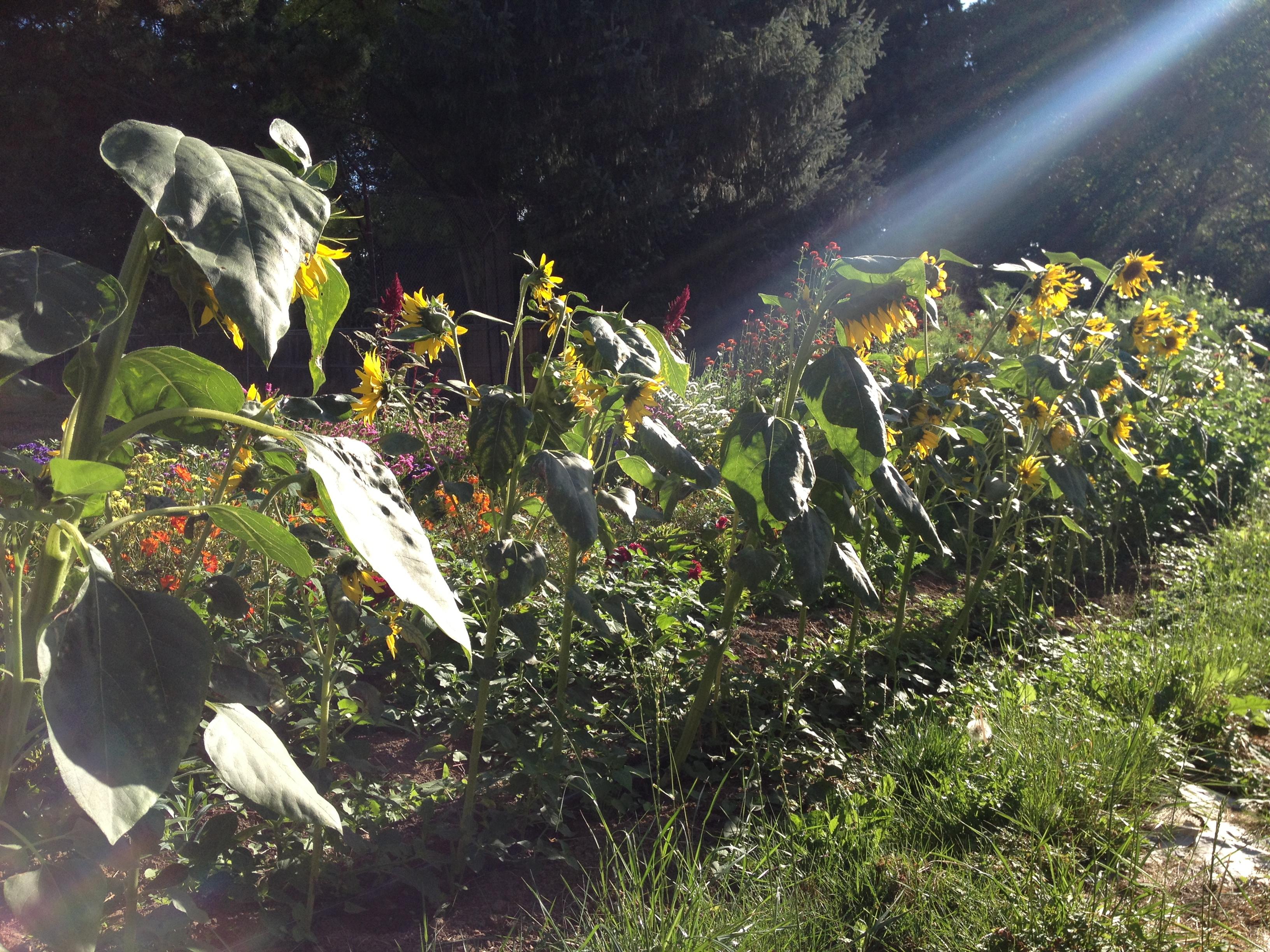 Garden consulting cully neighborhood farm for Garden consultant