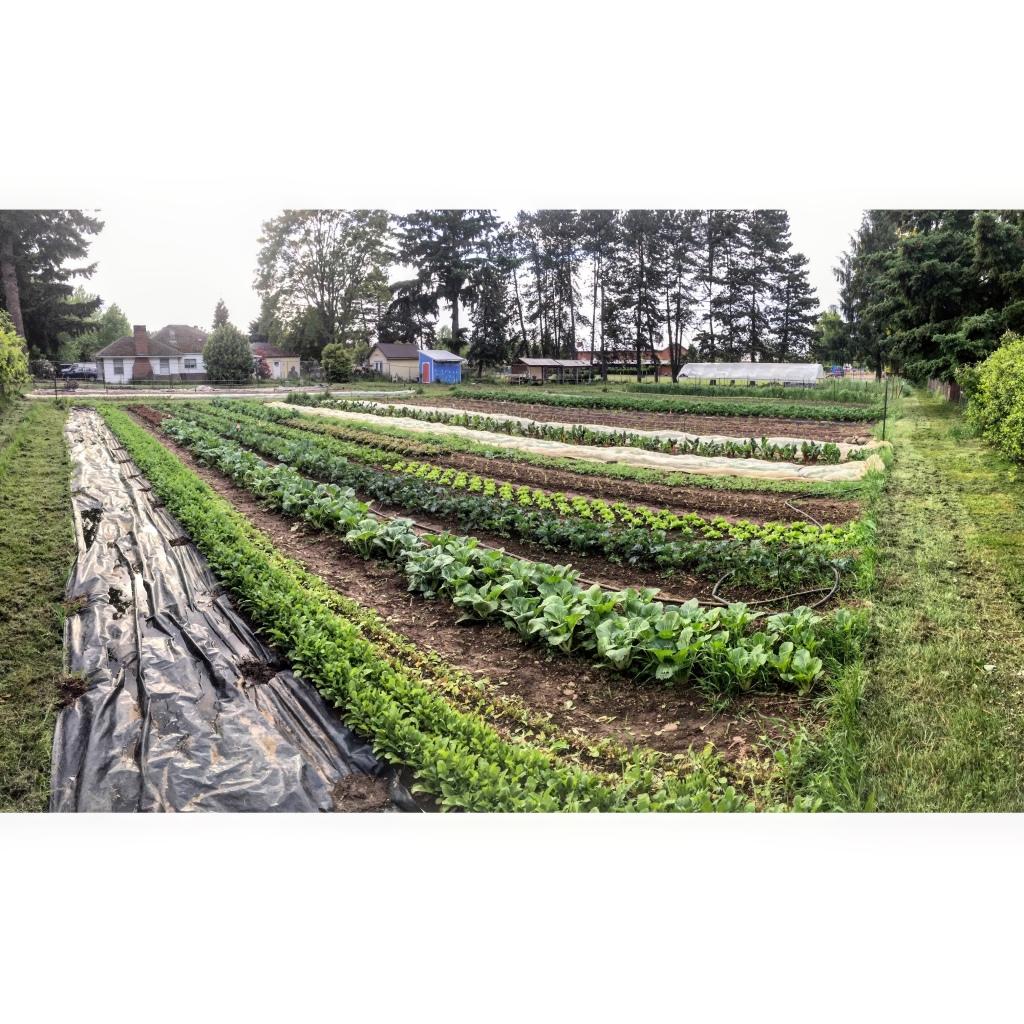 Panorama of farm fields