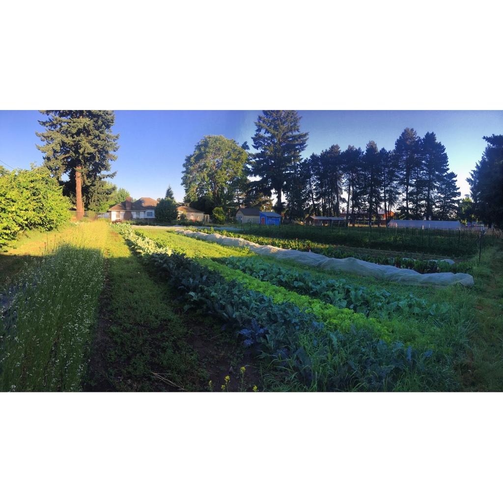 Pano of farm field
